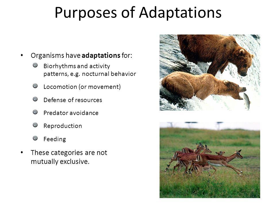 Purposes of Adaptations