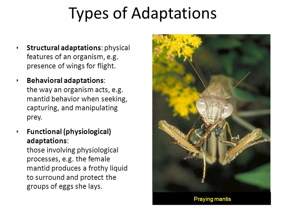 Types of Adaptations Structural adaptations: physical features of an organism, e.g. presence of wings for flight.