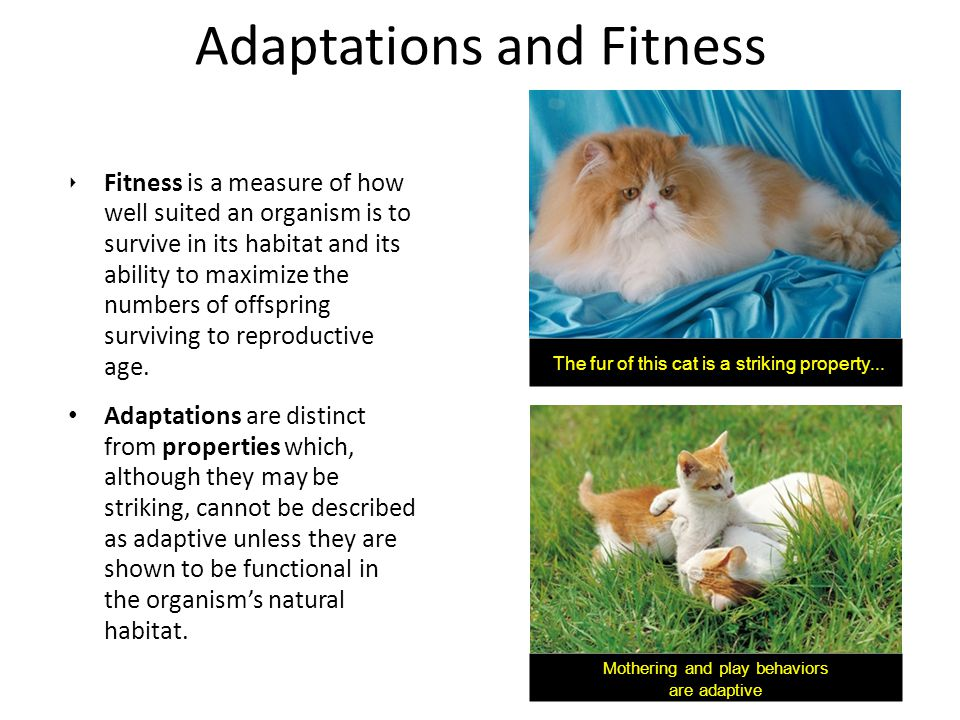 Adaptations and Fitness