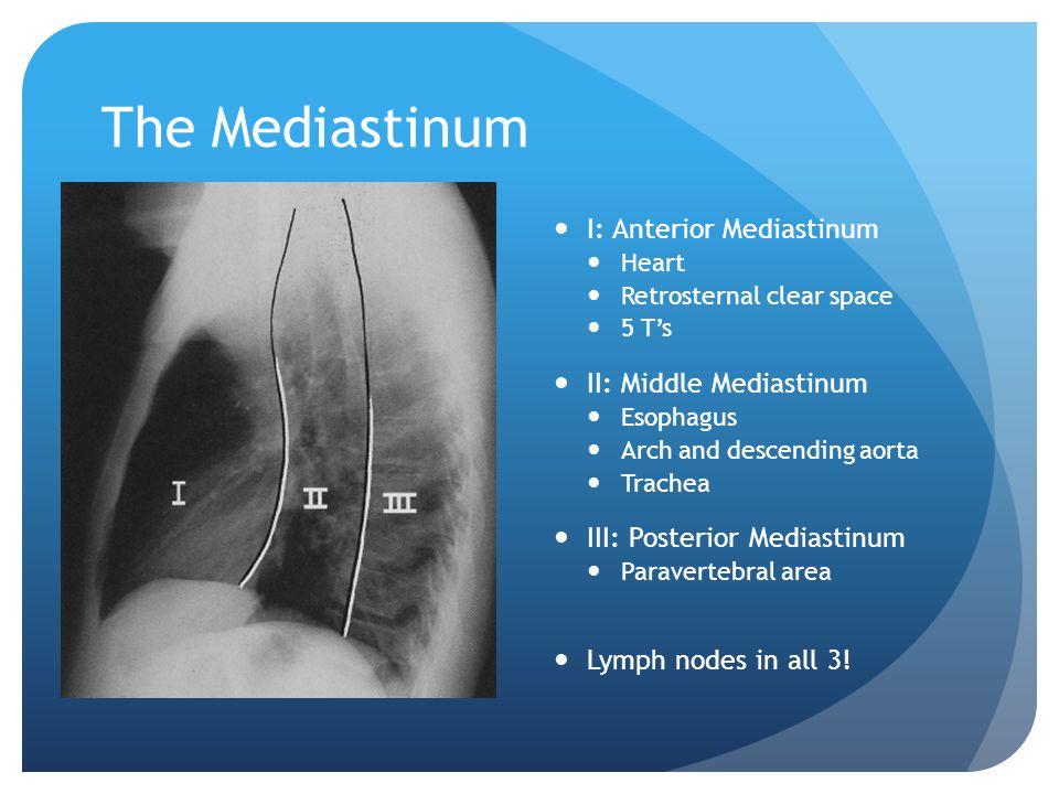 The Mediastinum I: Anterior Mediastinum II: Middle Mediastinum