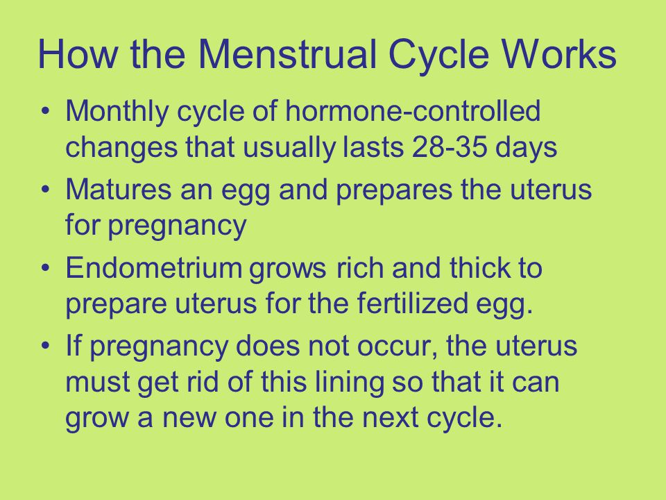 How the Menstrual Cycle Works