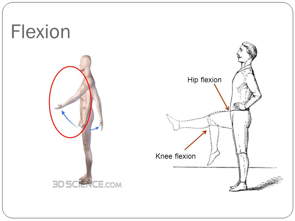 Flexion Hip flexion Knee flexion