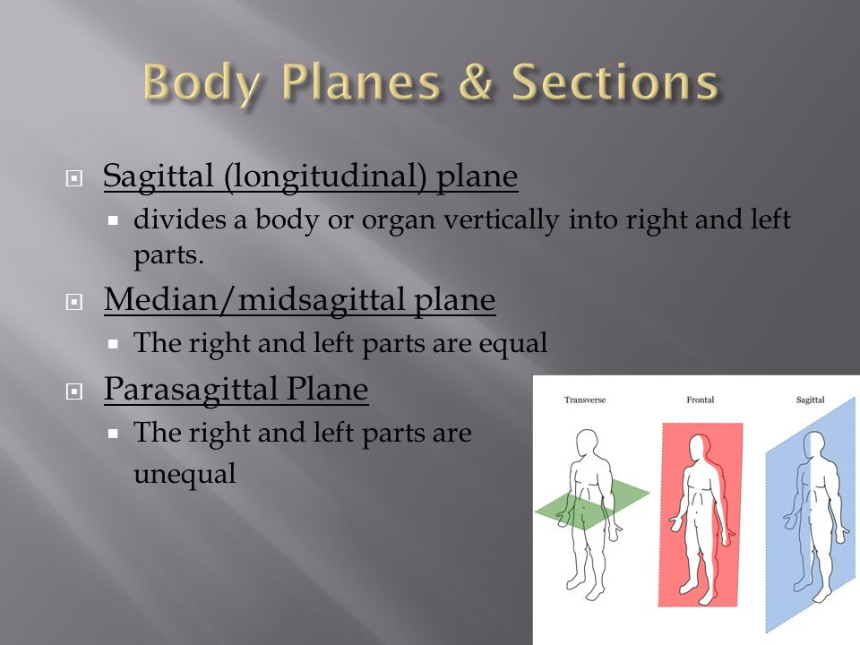 Body Planes & Sections Sagittal (longitudinal) plane