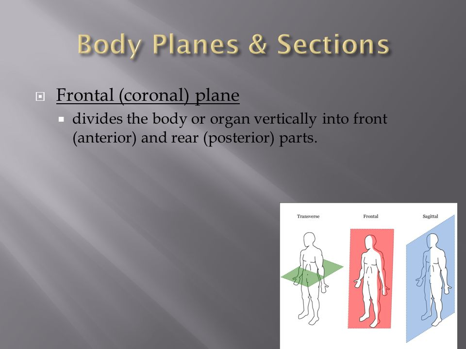 Body Planes & Sections Frontal (coronal) plane