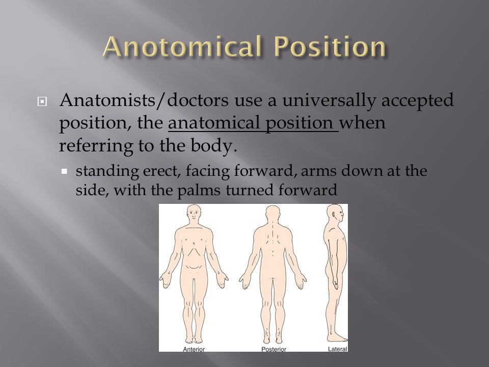 Anotomical Position Anatomists/doctors use a universally accepted position, the anatomical position when referring to the body.