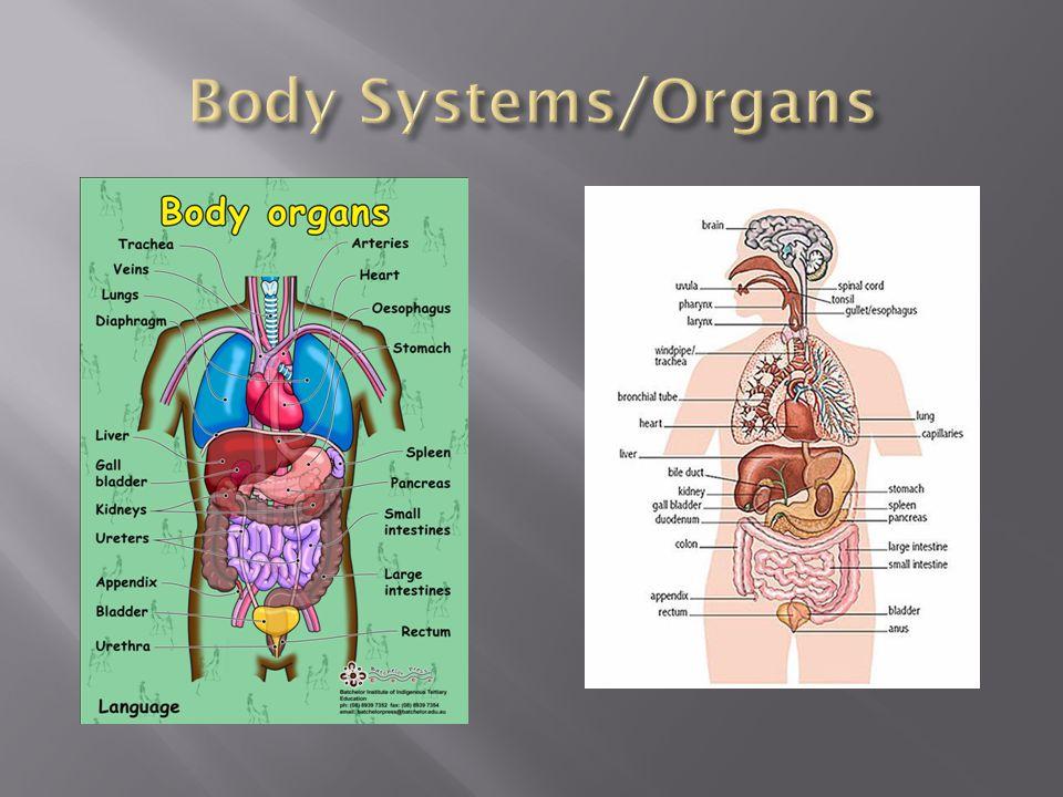 Body Systems/Organs