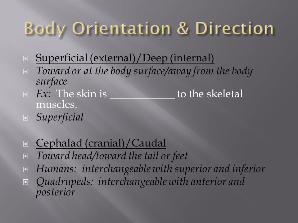 Body Orientation & Direction