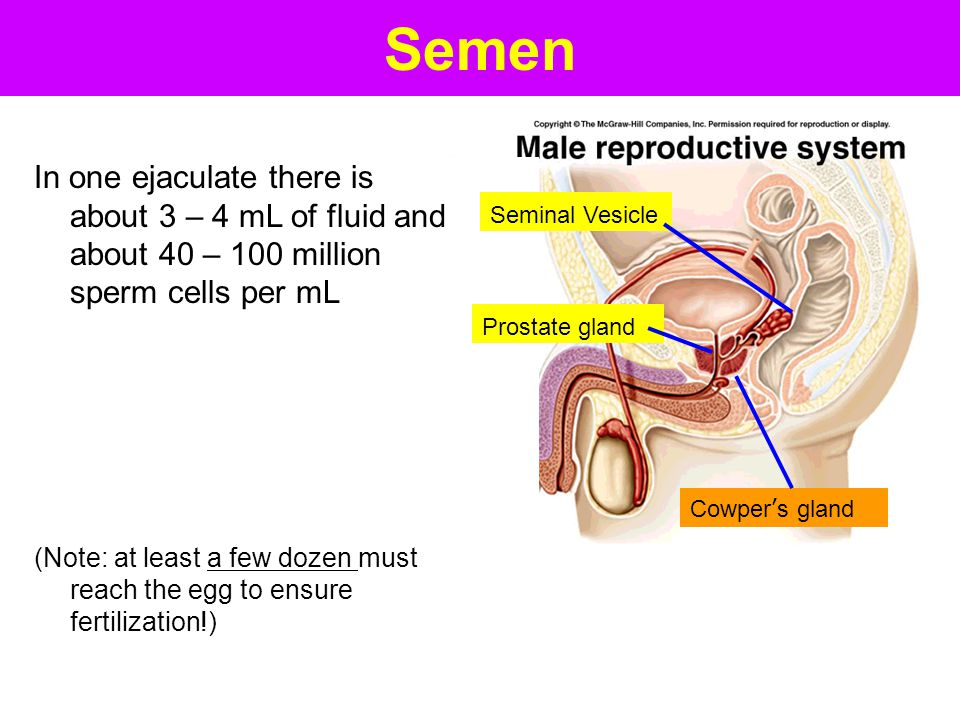 Semen In one ejaculate there is about 3 – 4 mL of fluid and about 40 – 100 million sperm cells per mL.