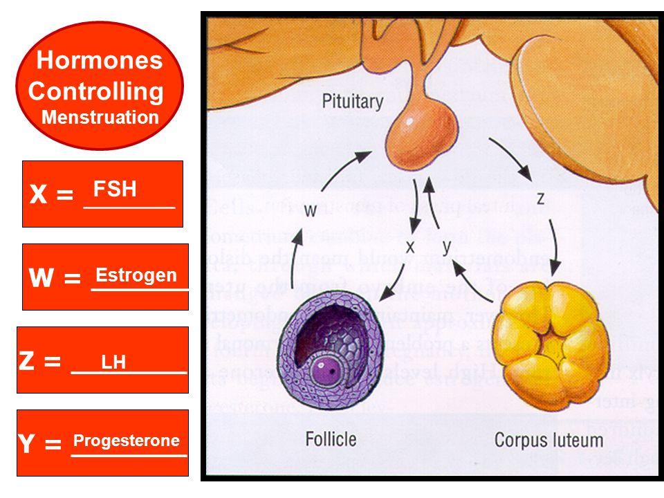 Hormones Controlling X = _______ W = ______ Z = _______ Y = _______