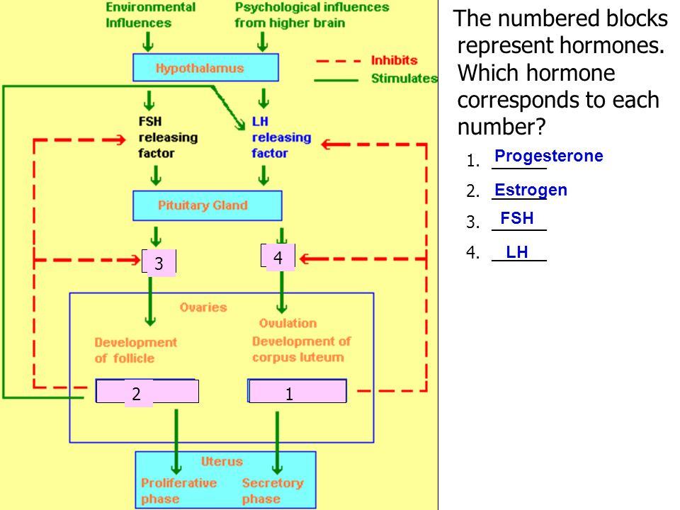 The numbered blocks represent hormones