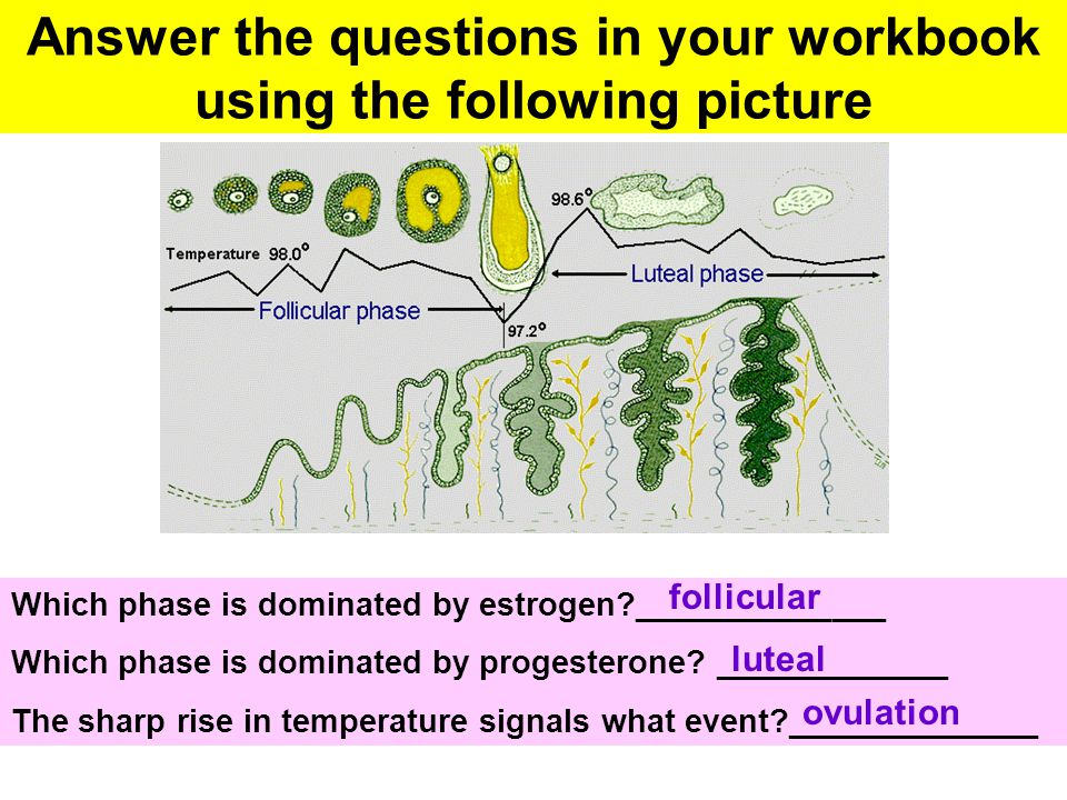 Answer the questions in your workbook using the following picture