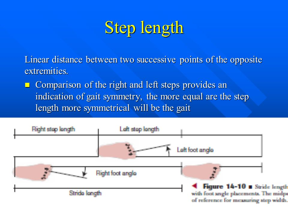 Step length Linear distance between two successive points of the opposite extremities.