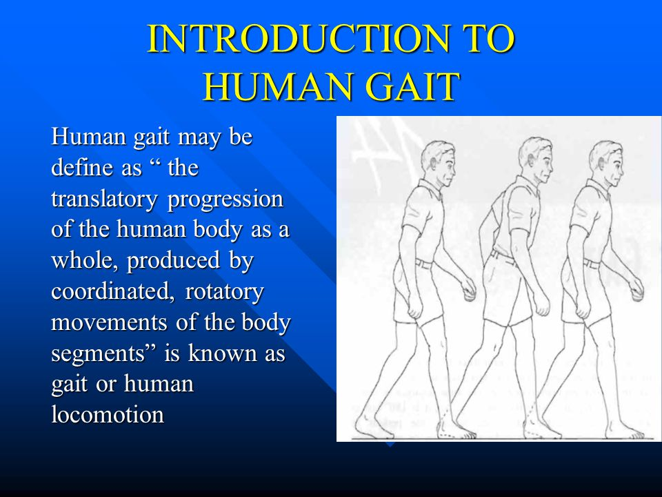 INTRODUCTION TO HUMAN GAIT