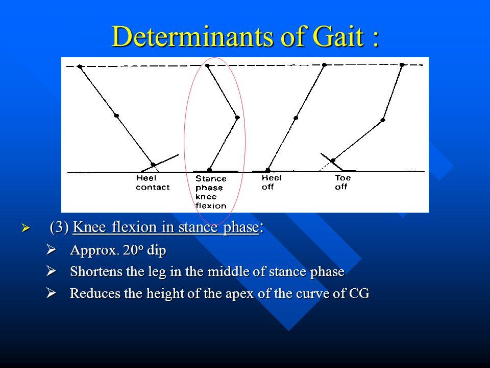 Determinants of Gait : (3) Knee flexion in stance phase: