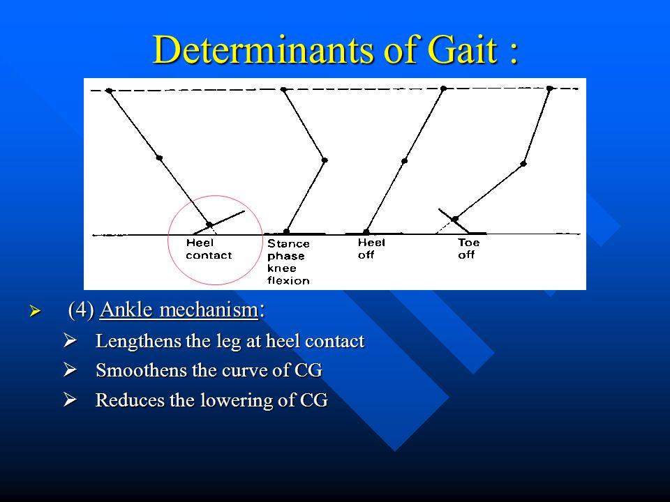 Determinants of Gait : (4) Ankle mechanism: