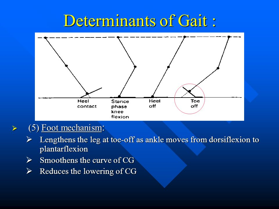 Determinants of Gait : (5) Foot mechanism: