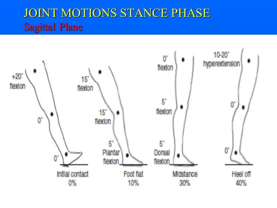 JOINT MOTIONS STANCE PHASE Sagittal Plane
