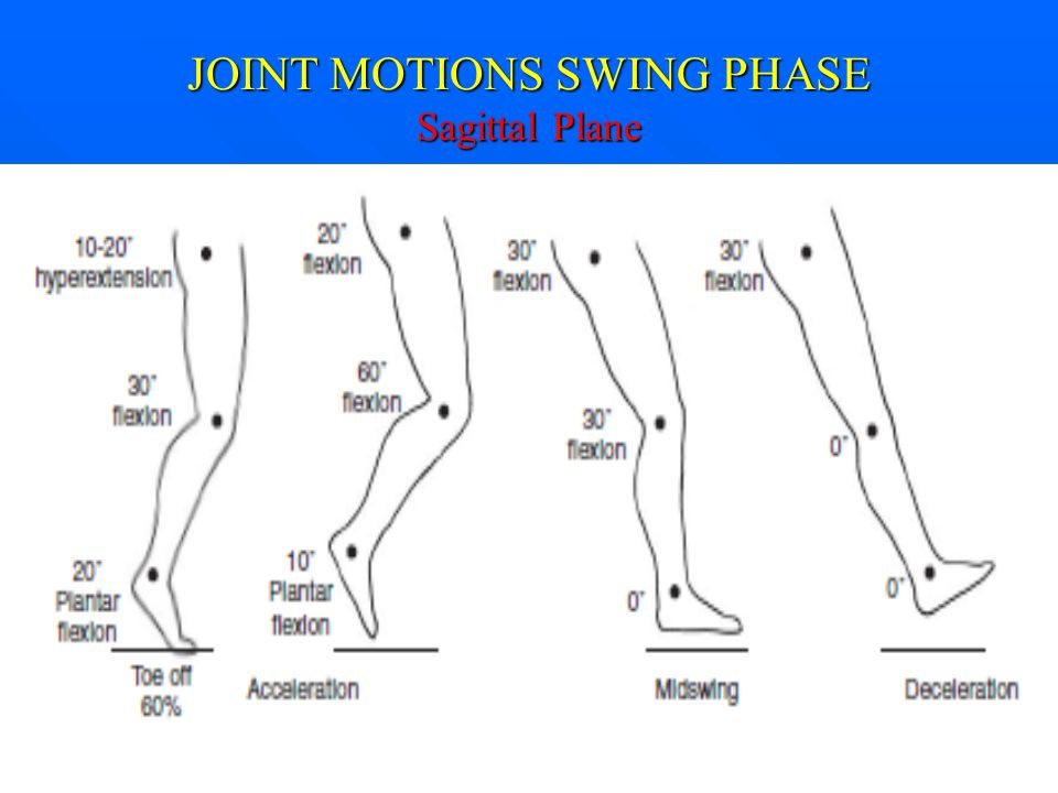 JOINT MOTIONS SWING PHASE Sagittal Plane