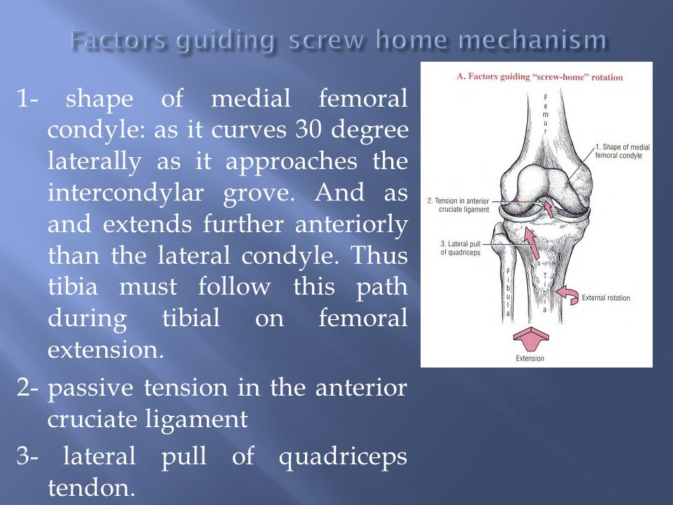 Factors guiding screw home mechanism