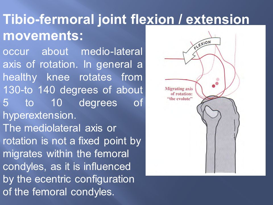 Tibio-fermoral joint flexion / extension movements: