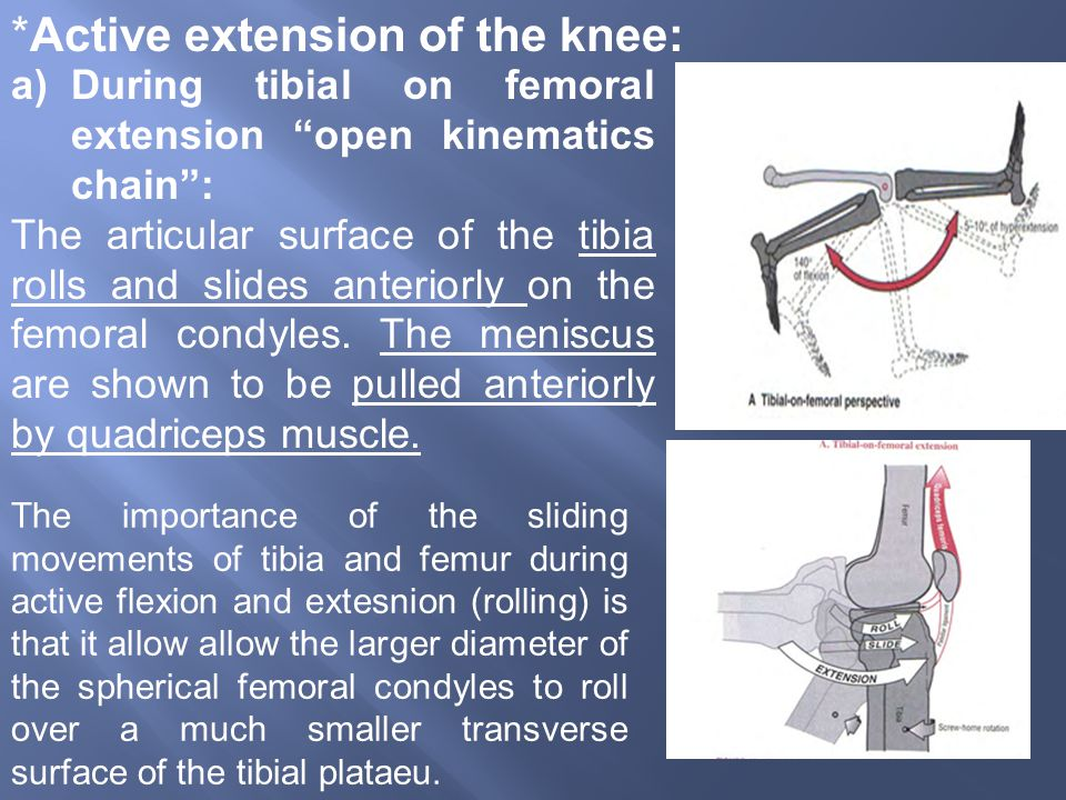 *Active extension of the knee: