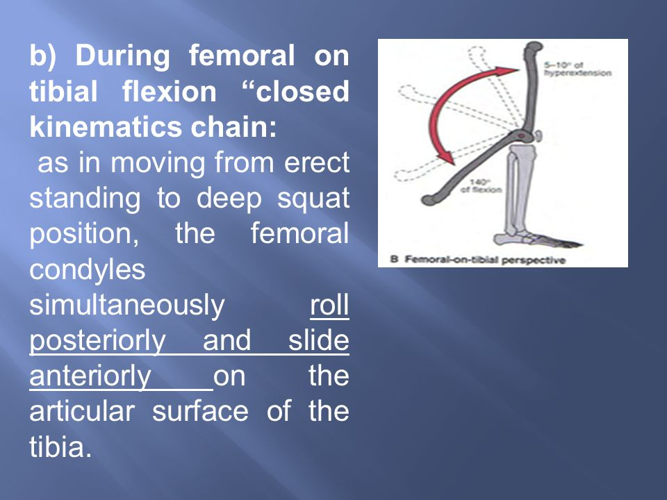 b) During femoral on tibial flexion closed kinematics chain: