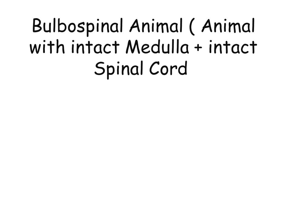 Bulbospinal Animal ( Animal with intact Medulla + intact Spinal Cord