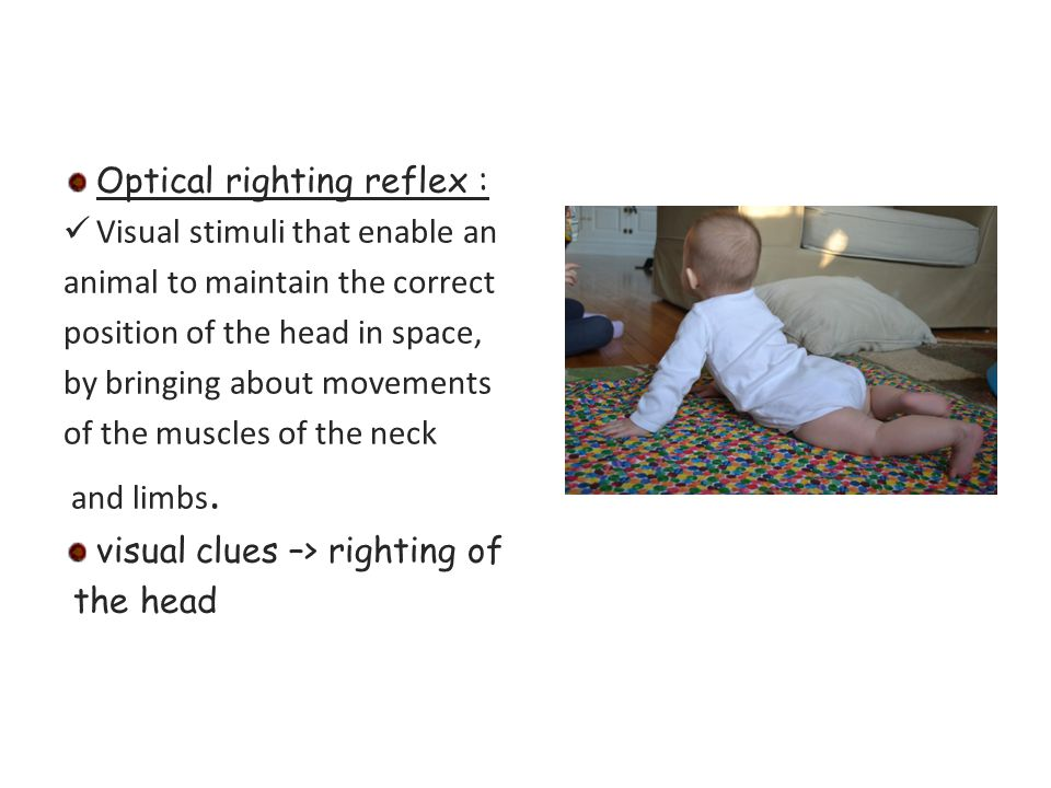 Optical righting reflex :