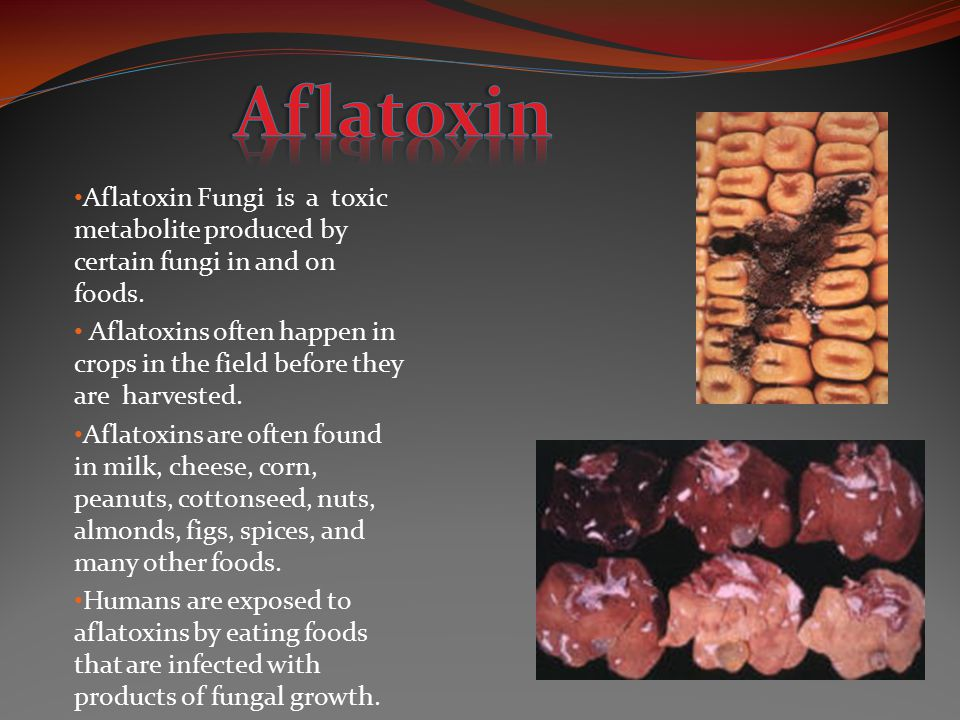 Aflatoxin Aflatoxin Fungi is a toxic metabolite produced by certain fungi in and on foods.