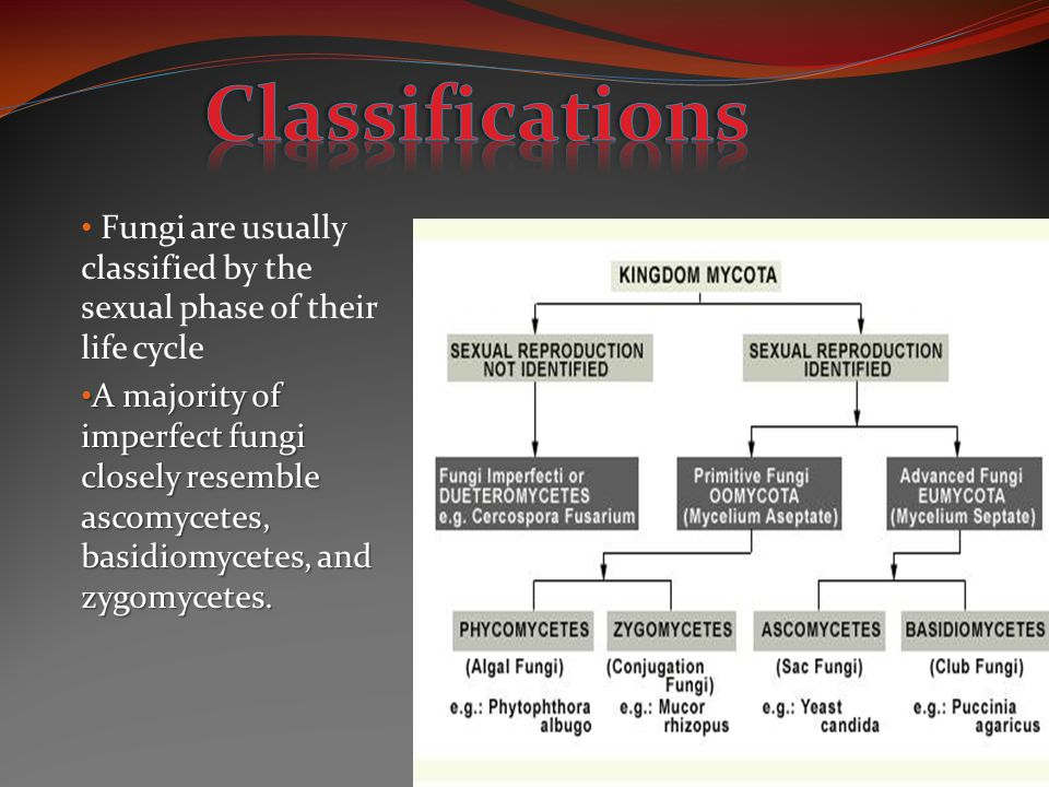 Classifications Fungi are usually classified by the sexual phase of their life cycle.