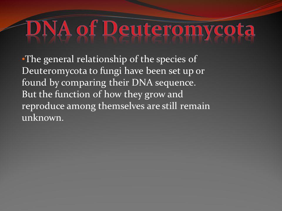 DNA of Deuteromycota
