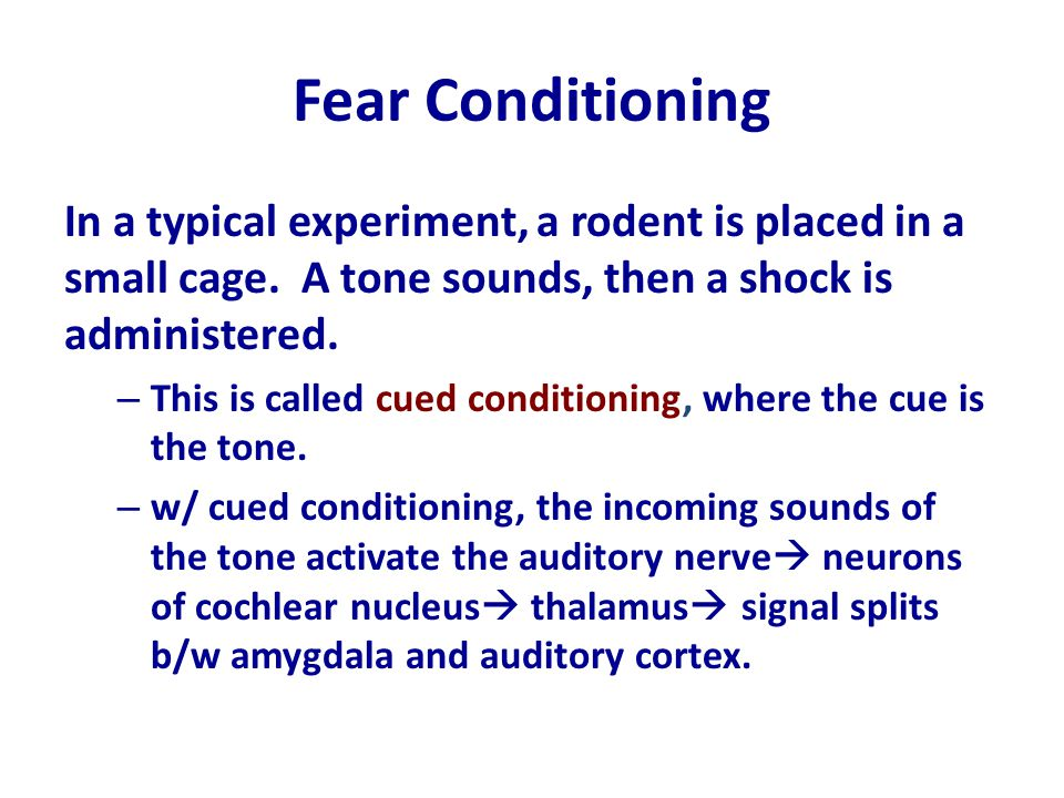 Fear Conditioning In a typical experiment, a rodent is placed in a small cage. A tone sounds, then a shock is administered.