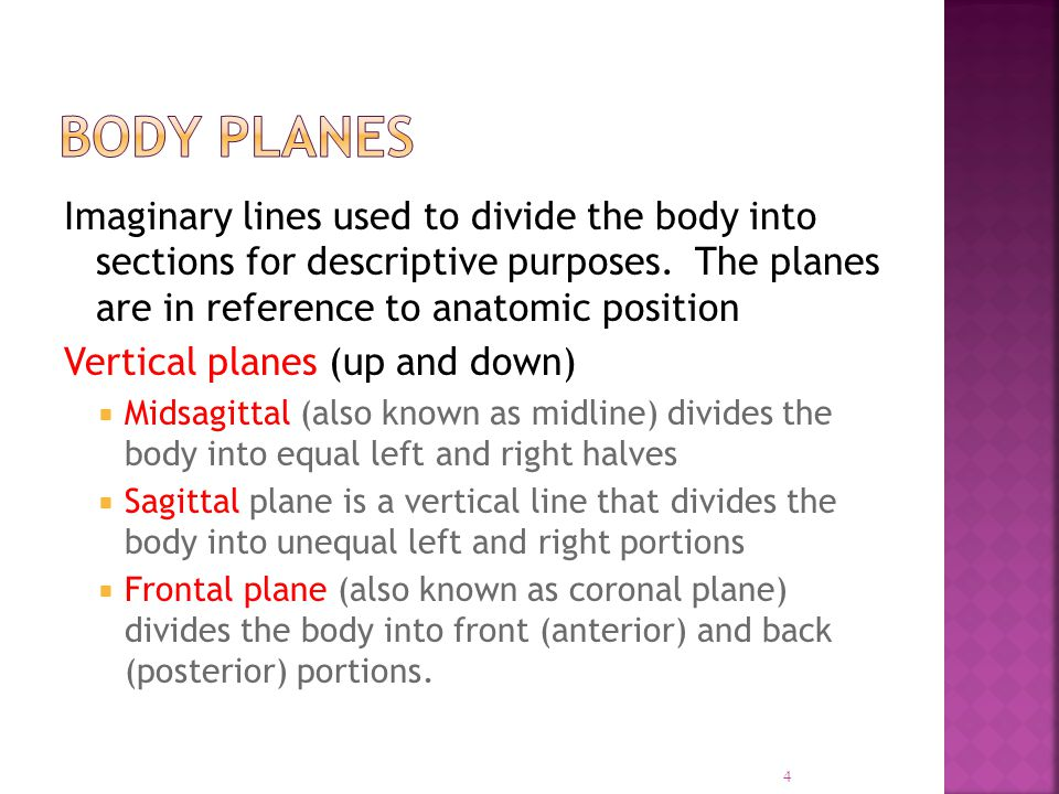 Body Planes Imaginary lines used to divide the body into sections for descriptive purposes. The planes are in reference to anatomic position.