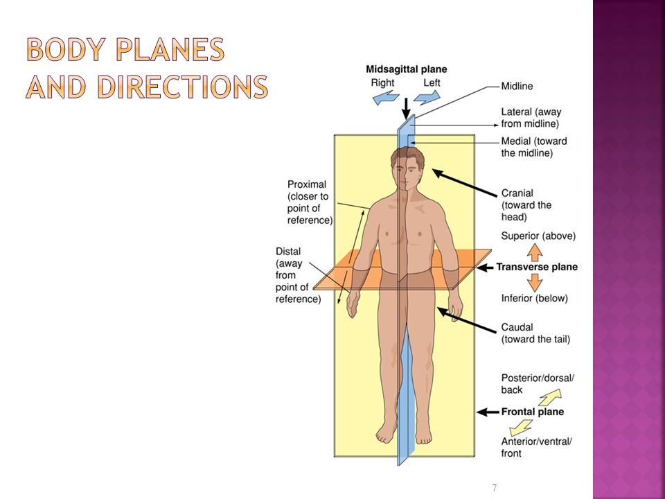 Body planes and directions