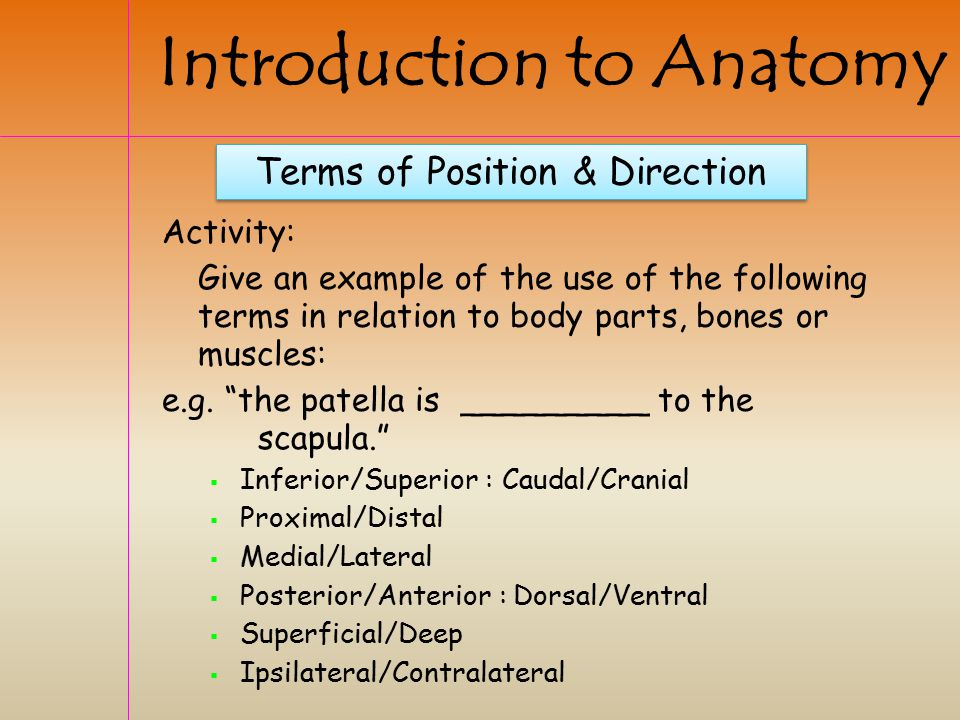Terms of Position & Direction