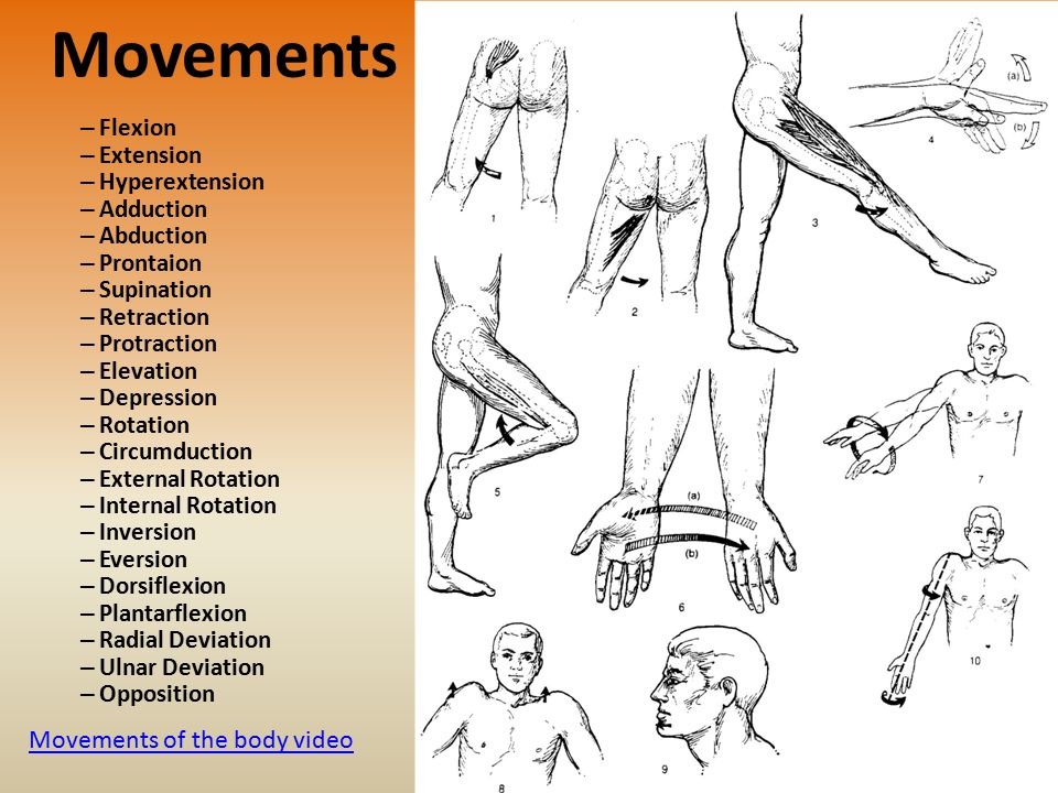 Movements Movements of the body video Flexion Extension Hyperextension