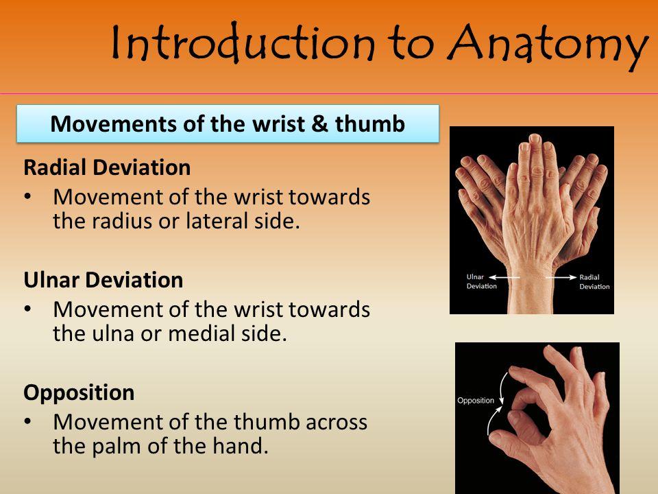 Movements of the wrist & thumb
