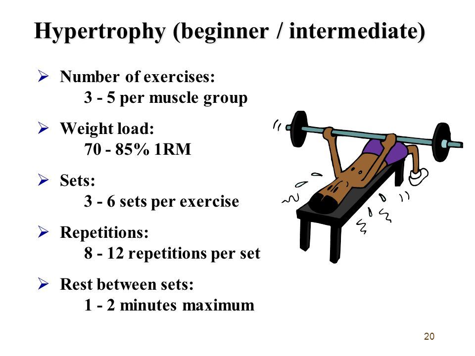 Hypertrophy (beginner / intermediate)