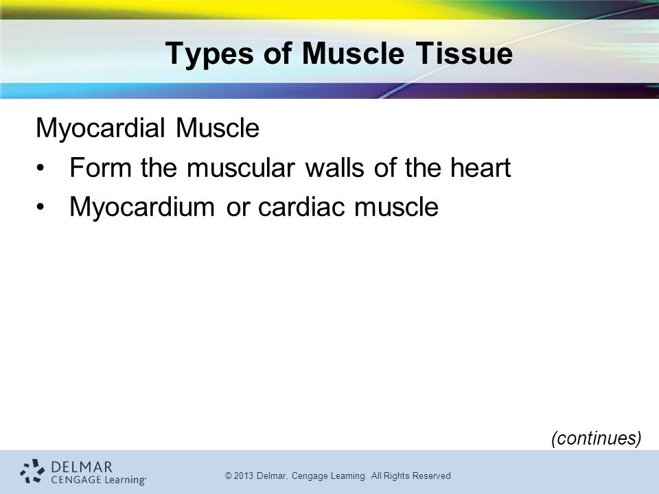 Types of Muscle Tissue Myocardial Muscle