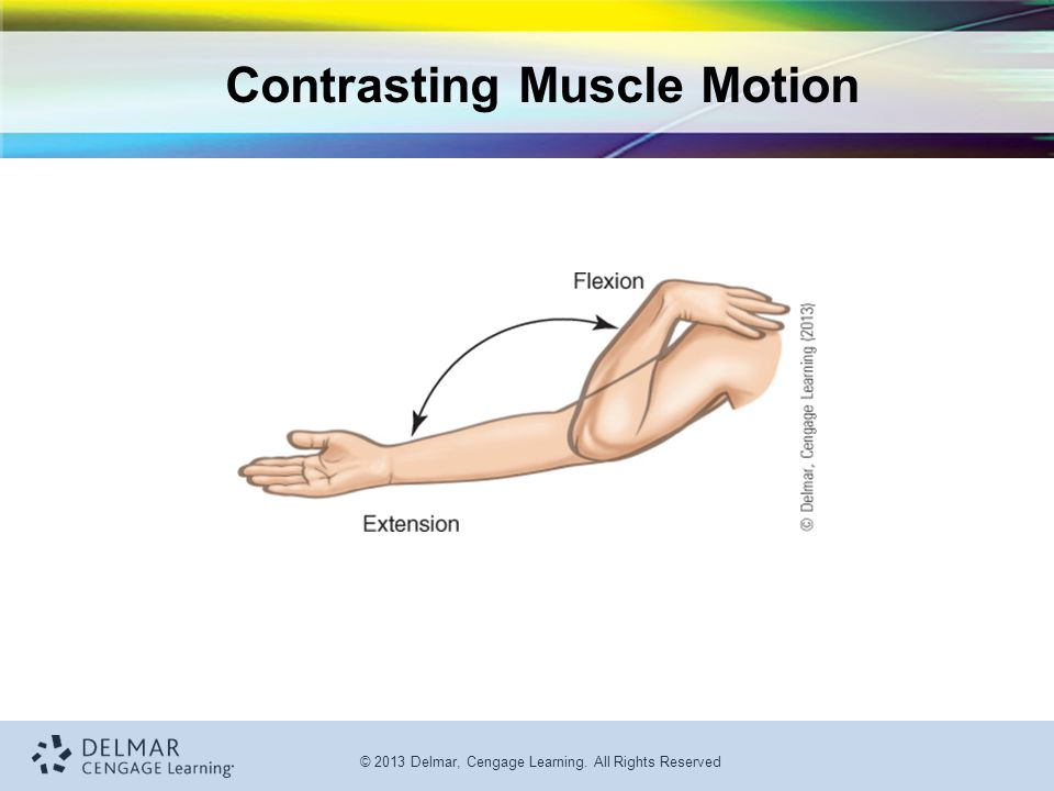 Contrasting Muscle Motion