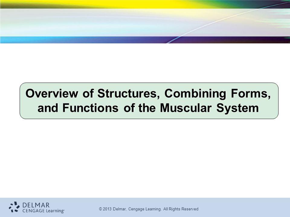 Overview of Structures, Combining Forms, and Functions of the Muscular System