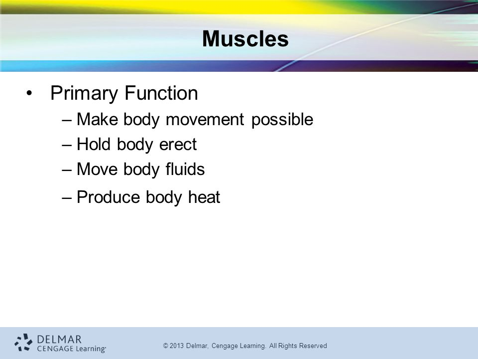 Muscles Primary Function Make body movement possible Hold body erect