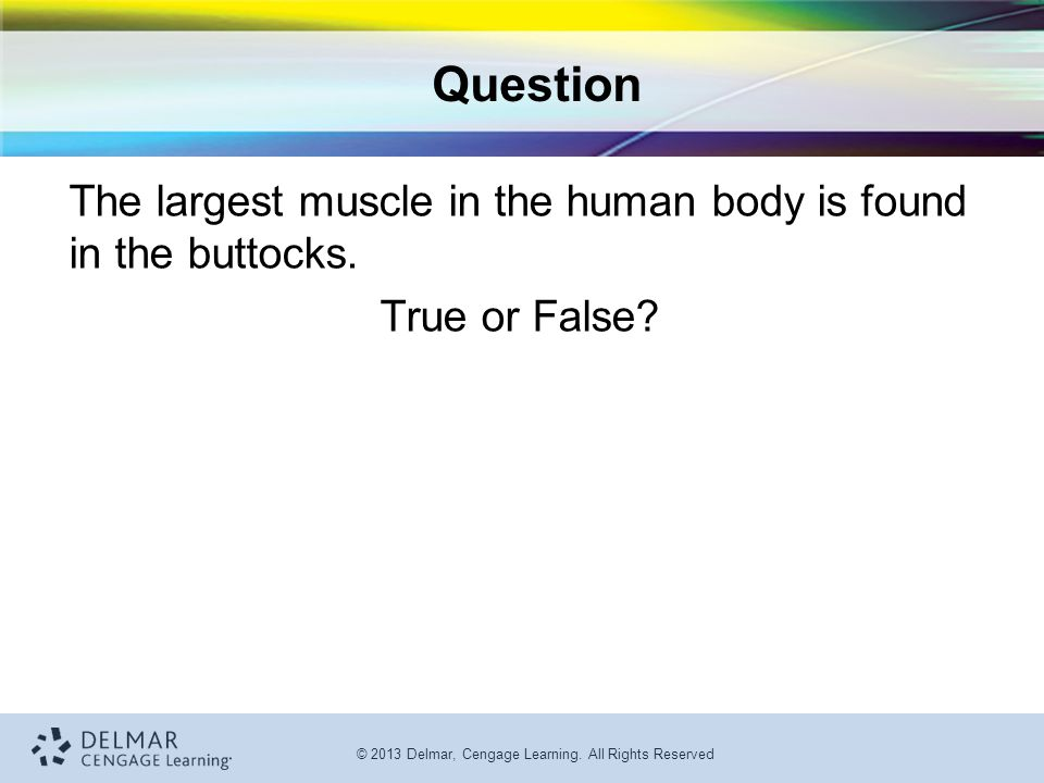 Question The largest muscle in the human body is found in the buttocks. True or False