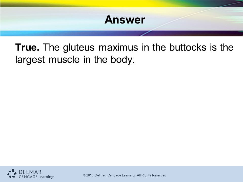 Answer True. The gluteus maximus in the buttocks is the largest muscle in the body.