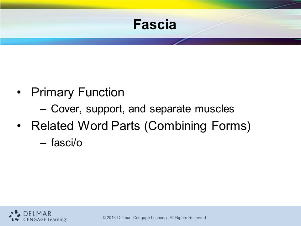 Fascia Primary Function Related Word Parts (Combining Forms)