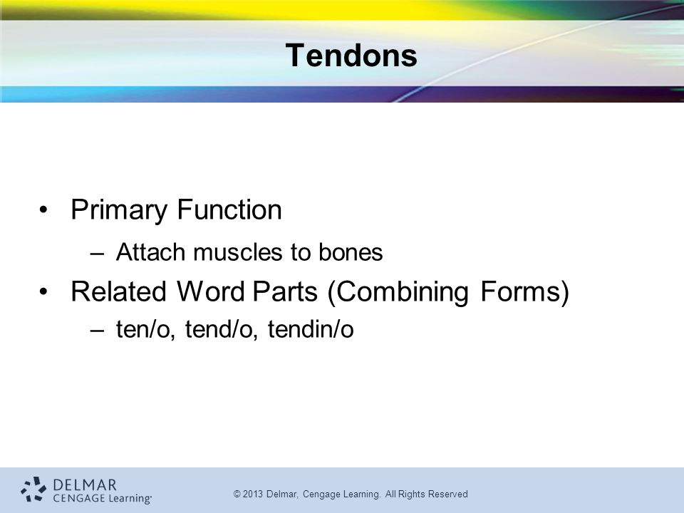 Tendons Primary Function Related Word Parts (Combining Forms)