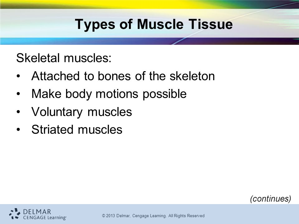 Types of Muscle Tissue Skeletal muscles: