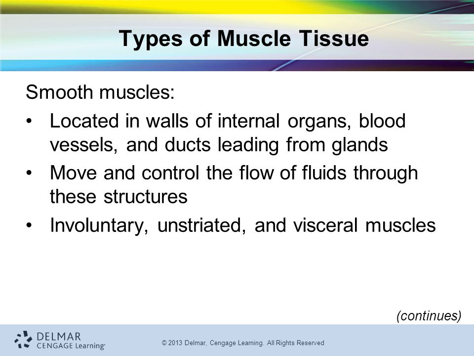 Types of Muscle Tissue Smooth muscles: