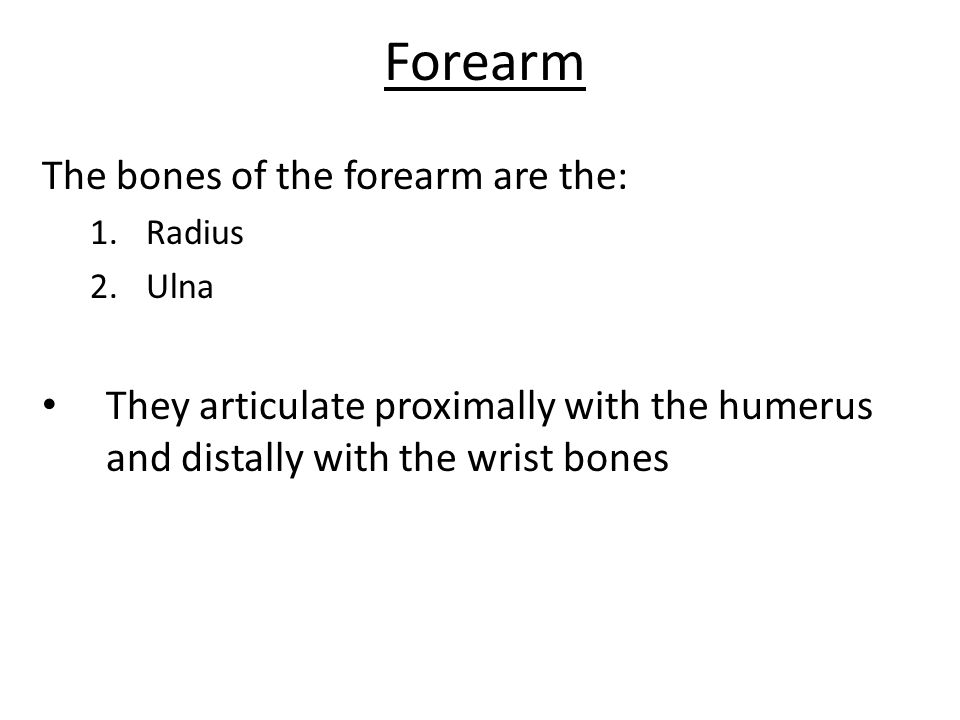 Forearm The bones of the forearm are the: