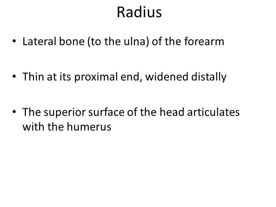 Radius Lateral bone (to the ulna) of the forearm